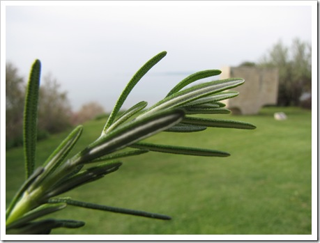 rosemary, anzac cove, gallipoli, turkey